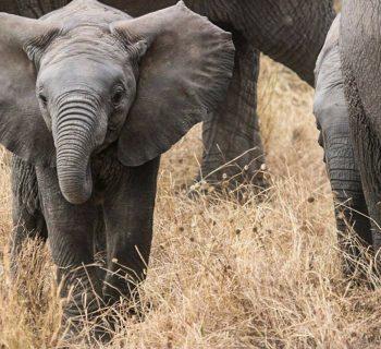 Turismo responsabile: Pinnawala Elephant Orphanage