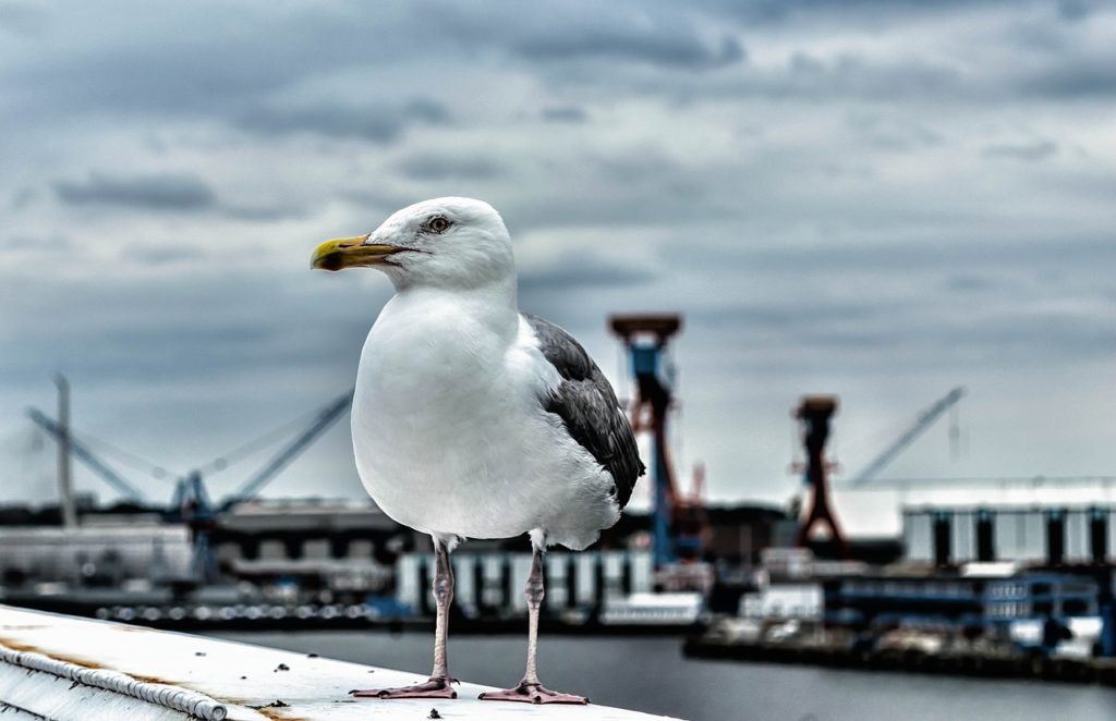 seagull-1589936_1280