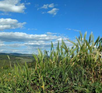 La Via Francigena: da San Gimignano a Monteriggioni